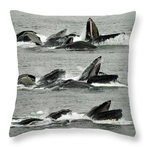 Humpback Whale Throw Pillow featuring the photograph Humpback Whale Bubble-net Feeding Sequence X5 V2 by Robert Shard