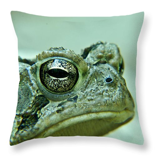 Frog Throw Pillow featuring the photograph Humph by Douglas Barnett