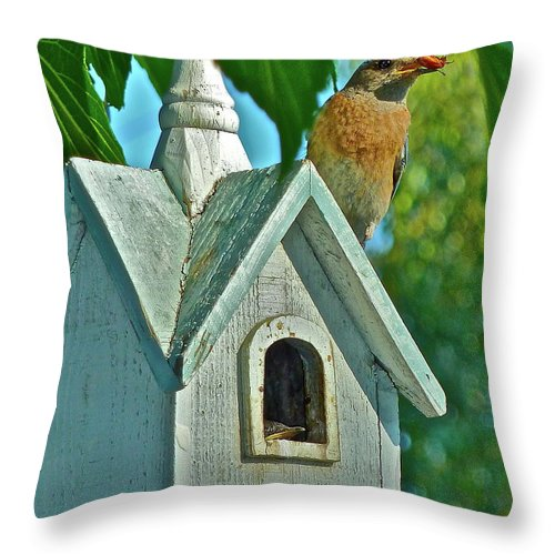 Birds Throw Pillow featuring the photograph Hungry Baby by Diana Hatcher