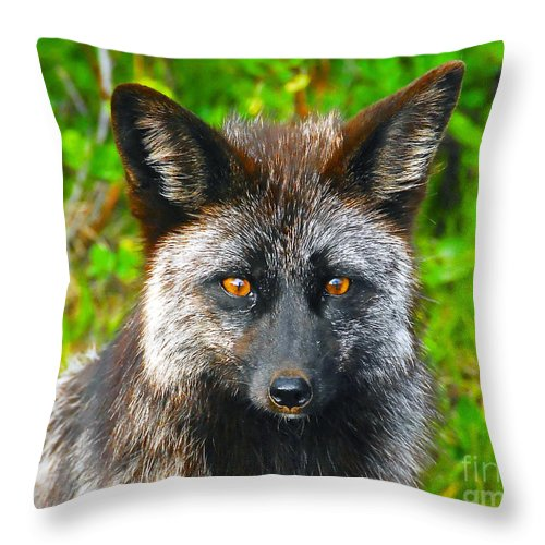 Gray Fox Throw Pillow featuring the photograph Hungry Eyes by David Lee Thompson