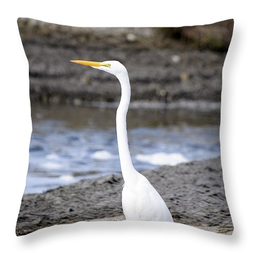 Egret Throw Pillow featuring the photograph Hungry Great Egret by Kenneth Albin