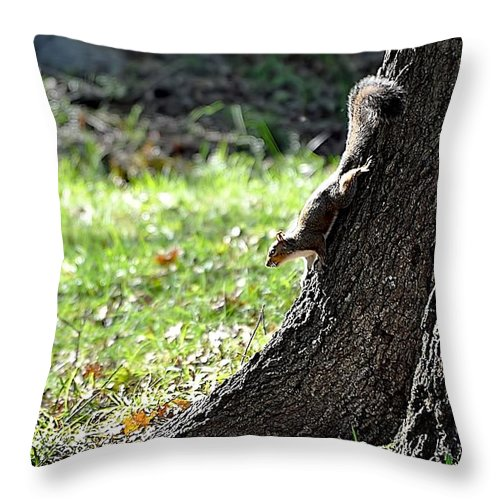 Animals Throw Pillow featuring the photograph Hunting Acorns by Jan Amiss Photography