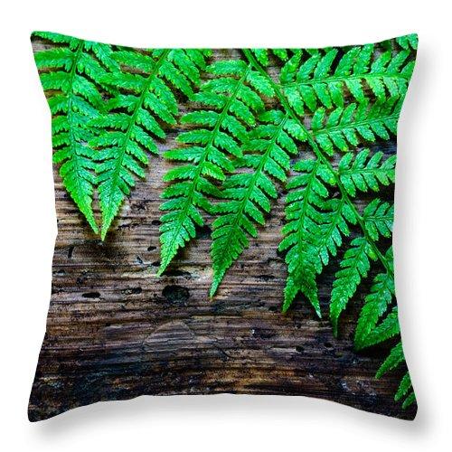 2015 Throw Pillow featuring the photograph Huntley Meadows Park #2 by Dan Girard