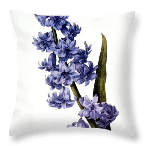 1833 Throw Pillow featuring the photograph Hyacinth by Granger