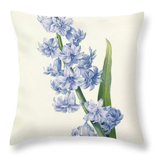Hyacinthus Throw Pillow featuring the drawing Hyacinth by Pierre Joseph Redoute