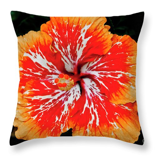 Flower Throw Pillow featuring the photograph Hybrid Hibiscus II Maui Hawaii by Jim Cazel