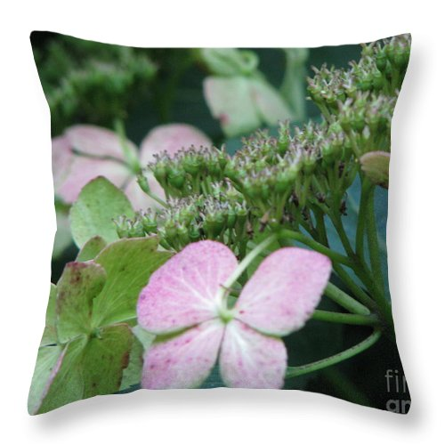 Hydrangea Throw Pillow featuring the photograph Hydrangea by Amanda Barcon