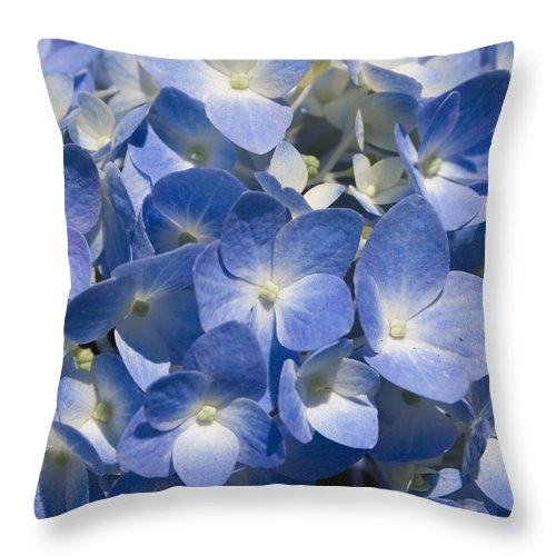Flower Bloom Blue White Close Nature Sunny Summer Hydrangea Throw Pillow featuring the photograph Hydrangea by Andrei Shliakhau