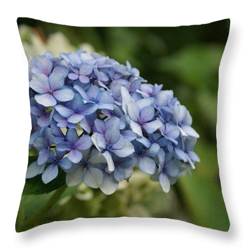 Hydrangea Throw Pillow featuring the photograph Hydrangea Blue Iv by Jacqueline Russell