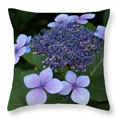 Blue Hydrangea Throw Pillow featuring the photograph Hydrangea Blue Xi by Jacqueline Russell