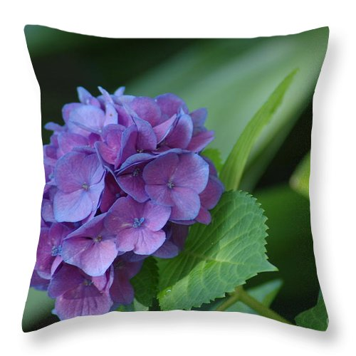 Flower Throw Pillow featuring the photograph Hydrangea by Donna Bentley