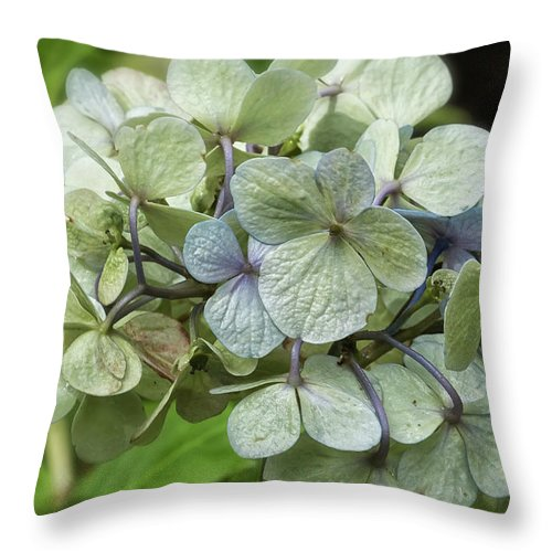 Hydrangea Throw Pillow featuring the photograph Hydrangea In Purple And Pale Yellow by Belinda Greb