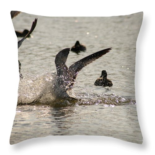 Clay Throw Pillow featuring the photograph Hysteria by Clayton Bruster