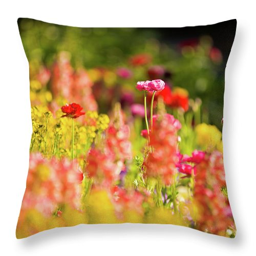 I Am Grateful Throw Pillow featuring the photograph I Am Grateful by Jamie Starling