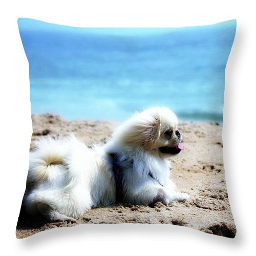 Dog On Beach Throw Pillow featuring the photograph I Am King Of This Beach by Ania M Milo
