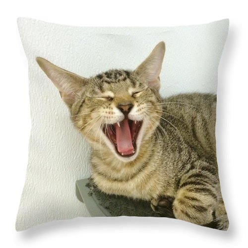 Domestic Cat Throw Pillow featuring the photograph I Am Tired by Diane Macdonald