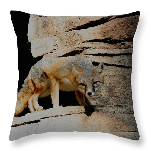 Fox Throw Pillow featuring the photograph I Dont Trust You Really I Dont by David Dunham