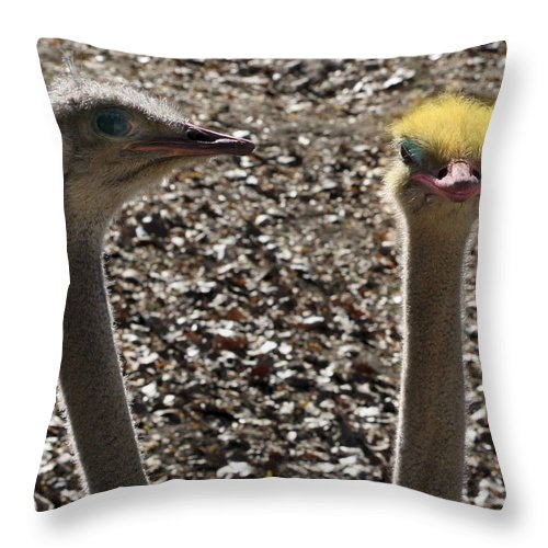 Ostrich Throw Pillow featuring the photograph I Feel Pretty by Marilyn Hunt