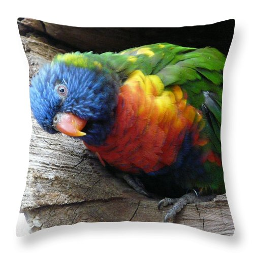 Bird Throw Pillow featuring the photograph I Hear You by Valerie Ornstein