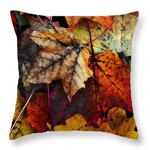 Fall Color Throw Pillow featuring the photograph I Love Fall 2 by Joanne Coyle