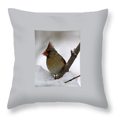 Bird Throw Pillow featuring the photograph I Love Seeds by Gaby Swanson