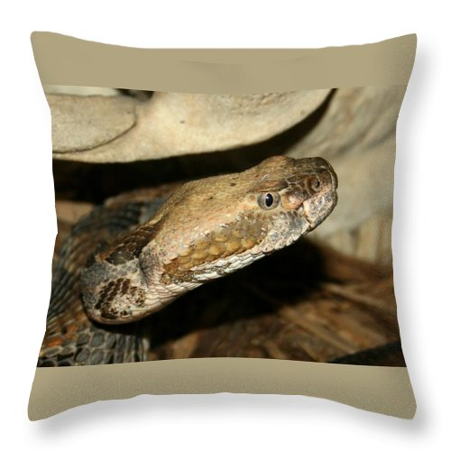 Snake Throw Pillow featuring the photograph I See You And I Don't Like It by David Dunham