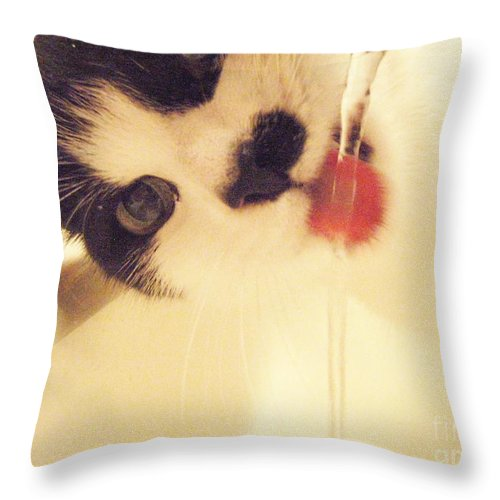 Cat Water Black White Tongue Pink Love Throw Pillow featuring the photograph I See You by Kristine Nora