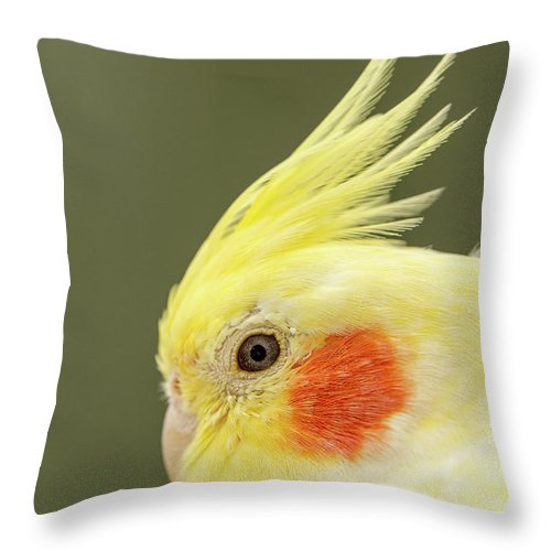 Yellow Budgies Throw Pillow featuring the photograph I See You by Maria Ollman