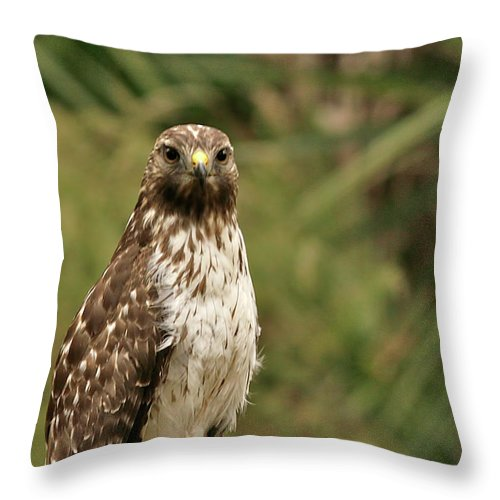 Bird Throw Pillow featuring the photograph I See You by Phill Doherty