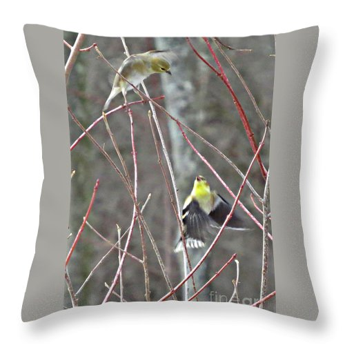 Two Birds Flying Throw Pillow featuring the photograph I See You Two Birds In Flight by Stephanie Forrer-Harbridge