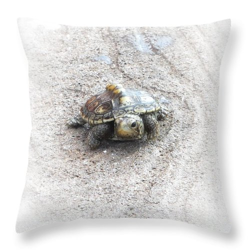 Turtle Throw Pillow featuring the photograph I Will Survive by Judy Hall-Folde