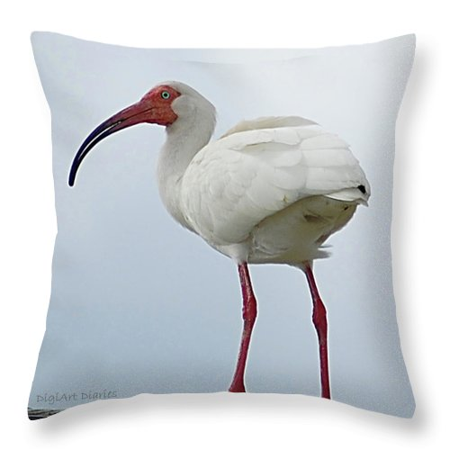 Bird Throw Pillow featuring the digital art Ibis In The Morning by DigiArt Diaries by Vicky B Fuller