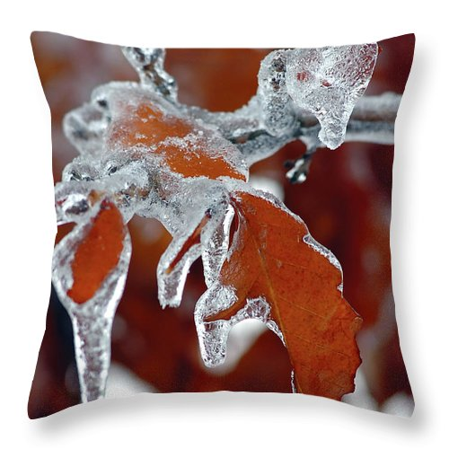 Ice Throw Pillow featuring the photograph Iced Leaves-2 by Steve Somerville