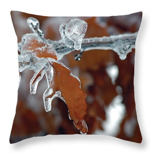 Ice Throw Pillow featuring the photograph Iced Leaves by Steve Somerville