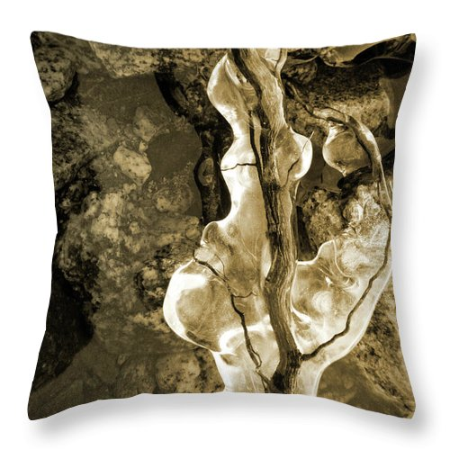 Ice Throw Pillow featuring the photograph Iced by Tara Turner