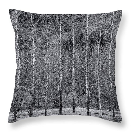 Iceland Throw Pillow featuring the photograph Iceland Landscape # 10 by Allen Beatty