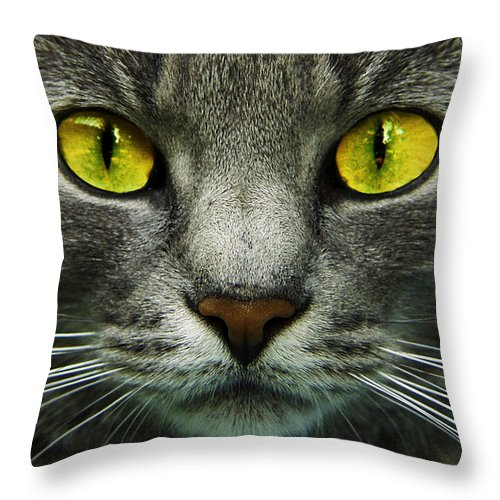 Cats Throw Pillow featuring the photograph I.c.u. by Joachim G Pinkawa