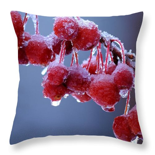 Winter Throw Pillow featuring the photograph Icy Berries by Lisa Kane