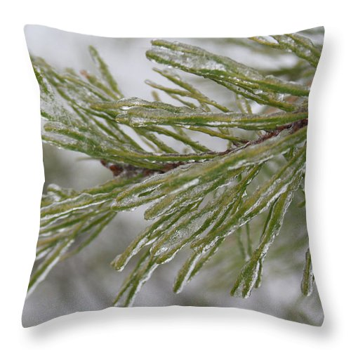 Icy Throw Pillow featuring the photograph Icy Fingers Of The Pine by Douglas Barnett