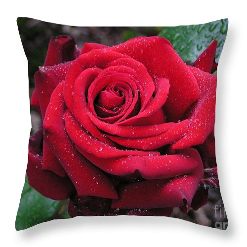 Rose Throw Pillow featuring the photograph Icy Rose by Louise Magno