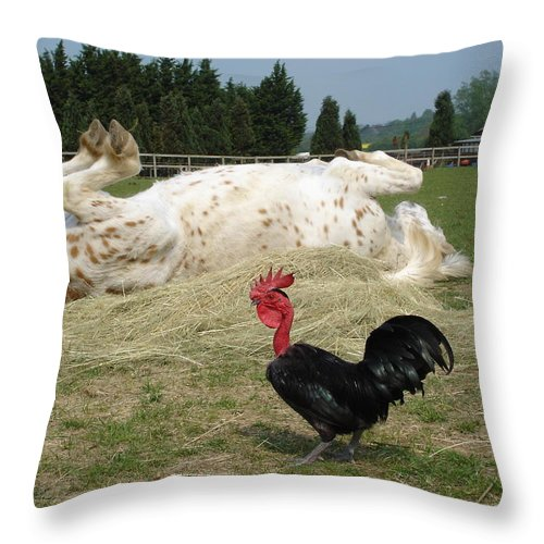 Pony Throw Pillow featuring the photograph If Looks Could Kill by Susan Baker