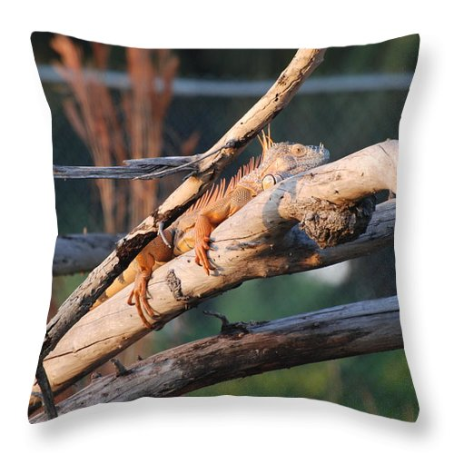 Branches Throw Pillow featuring the photograph Igauna On A Stick by Rob Hans