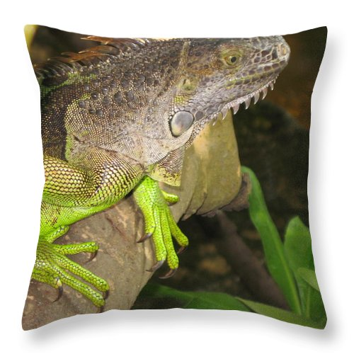 Iguana Throw Pillow featuring the photograph Iguana - A Special Garden Guest by Christiane Schulze Art And Photography