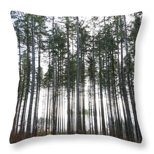 Trees Throw Pillow featuring the photograph Illumination by Dani Keating