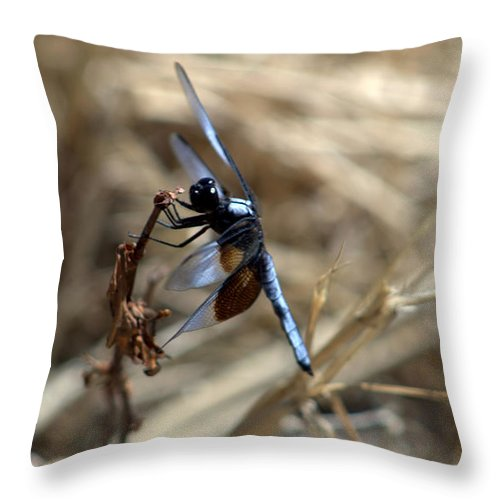 Dragonfly Throw Pillow featuring the photograph Illusionist by Elizabeth Hart