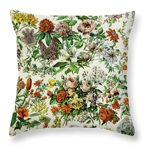 Floral Throw Pillow featuring the drawing Illustration Of Flowering Plants by Adolphe Philippe Millot