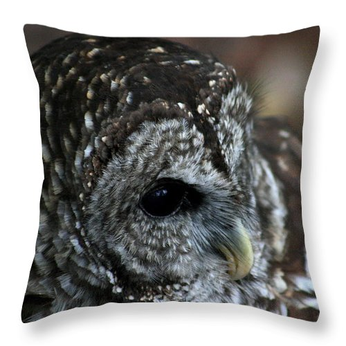 Owl Throw Pillow featuring the photograph Im Too Sexy For My Beak by David Dunham