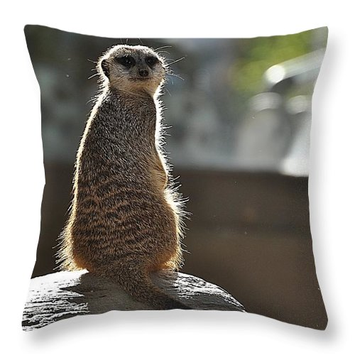 Animals Throw Pillow featuring the photograph I'm Watching You by Jan Amiss Photography