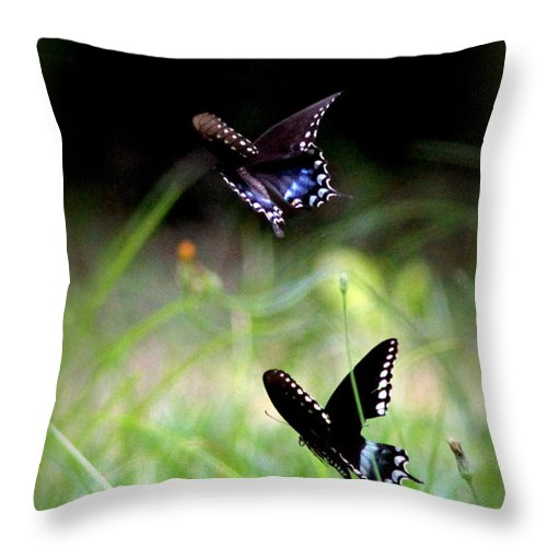 Butterfly Throw Pillow featuring the photograph Img_1521 - Butterfly by Travis Truelove