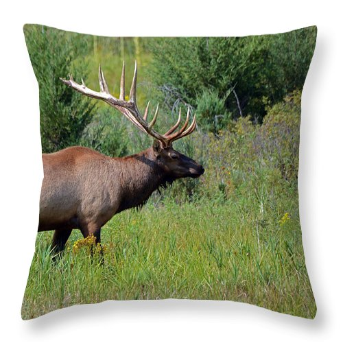 Wapiti Throw Pillow featuring the photograph Imperial Bull Elk by Whispering Peaks Photography